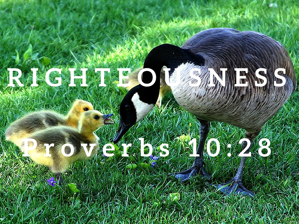 Proverbs 10:28